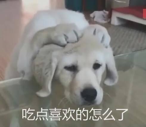 """""""我家狗老爱吃屎,我想扔掉它了......"""""""