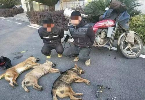 原来的广东偷狗帮全军覆没,警察用冲锋枪上阵。该案件涉及400多名嫌疑人