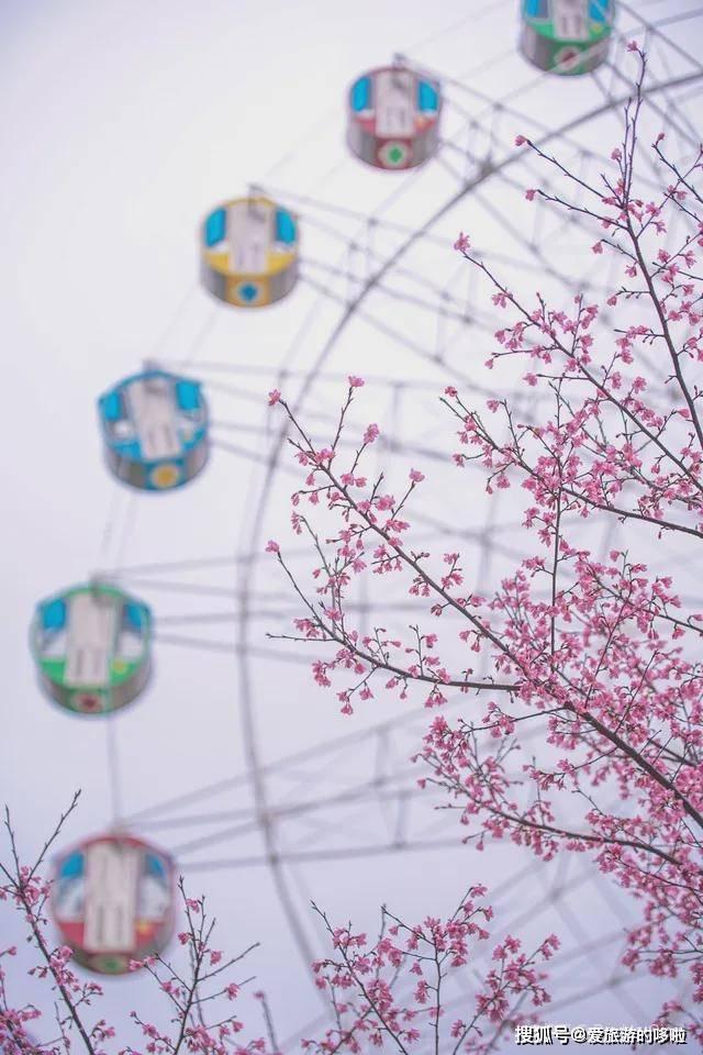 这个春天去哪赏花?收藏好这份赏花地图,够你玩到4月底!