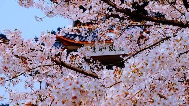 春风十里不如一起,3月春暖花开,适合小住三五天的10个地方