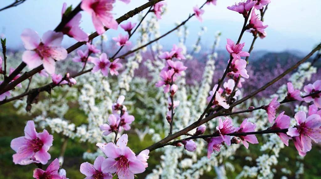 【创建天府旅游名县】三月春游来四川兴文这些地方一定没错