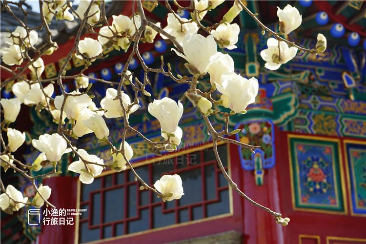 这座西安城墙脚下的秘境古寺,藏着绝美春色!人少免费,处处皆景
