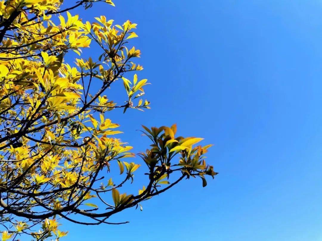 春天洋顶岽——一幅生命生长的画卷