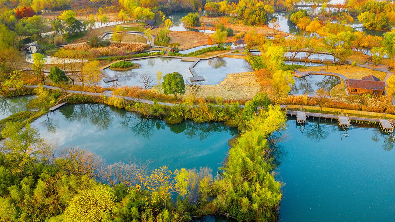"""""""美丽中国""""邮票系列中的西溪湿地,水中村落散布,堪称颜值担当"""