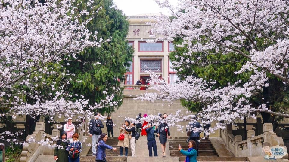 原创             全城50万株樱花树盛开,武汉不只有武大,还有其他众多赏樱胜地