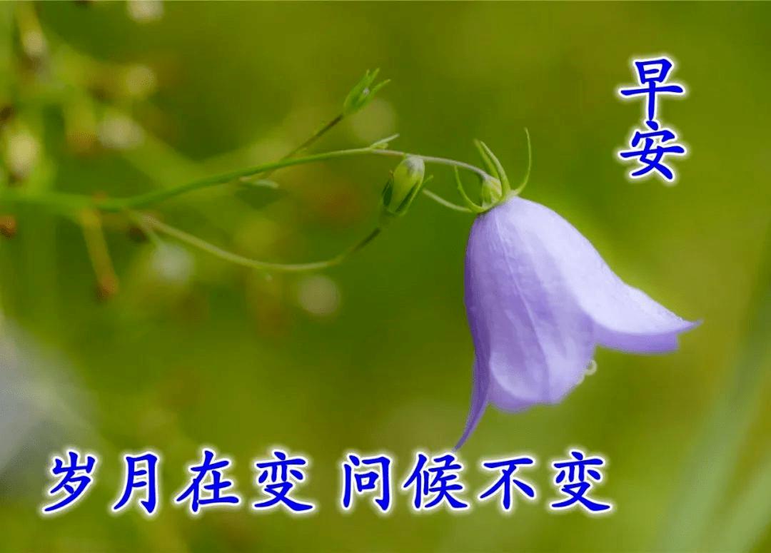 温馨的立冬时节问候祝福语 描写立冬节气的优美句子