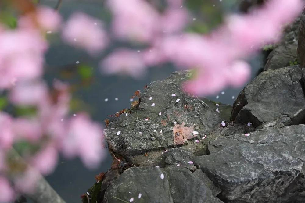 苏州园林版春季赏花攻略来啦!建议收藏!_苏州旅游攻略
