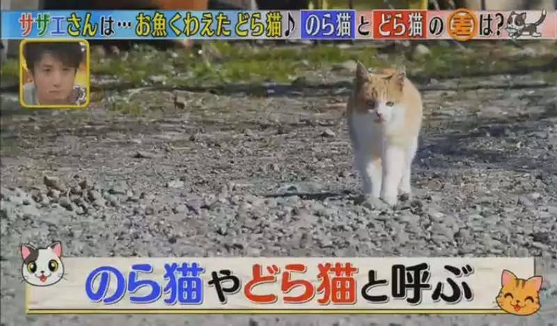 「流浪貓」的日語有兩種表達,區別在于哪?