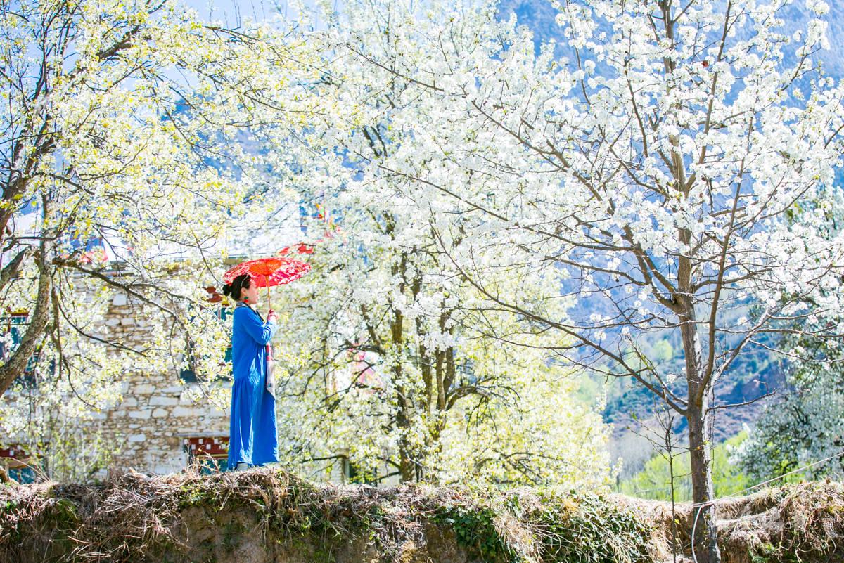 原创             这里比甲居藏寨隐蔽,百年梨花开满山,仿若世外桃源