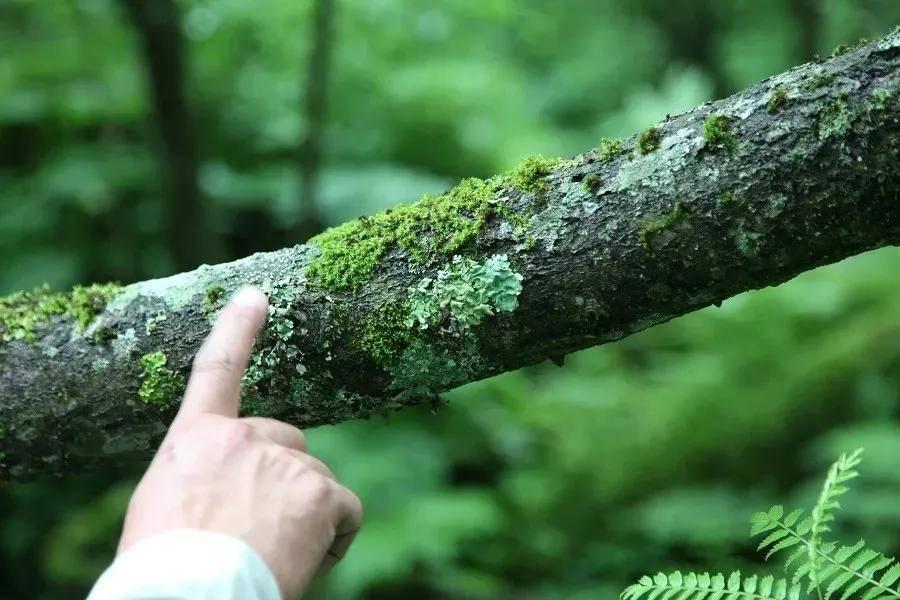 来一场原始森林科考探秘之旅_生物