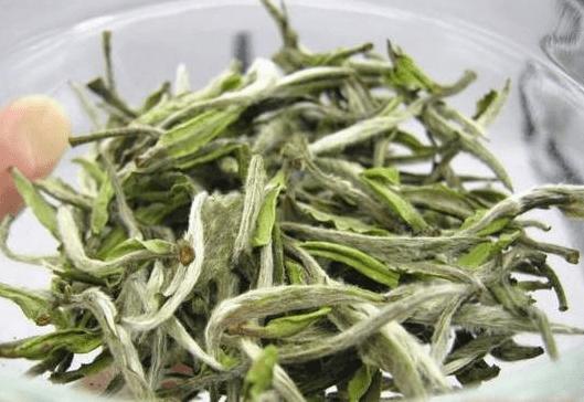 长了白毛的茶叶,是不是发霉了?