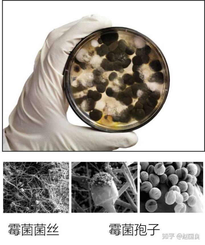 食品厂霉菌控制具体操作方法