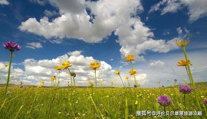 春天去呼伦贝尔大草原旅游怎么样?