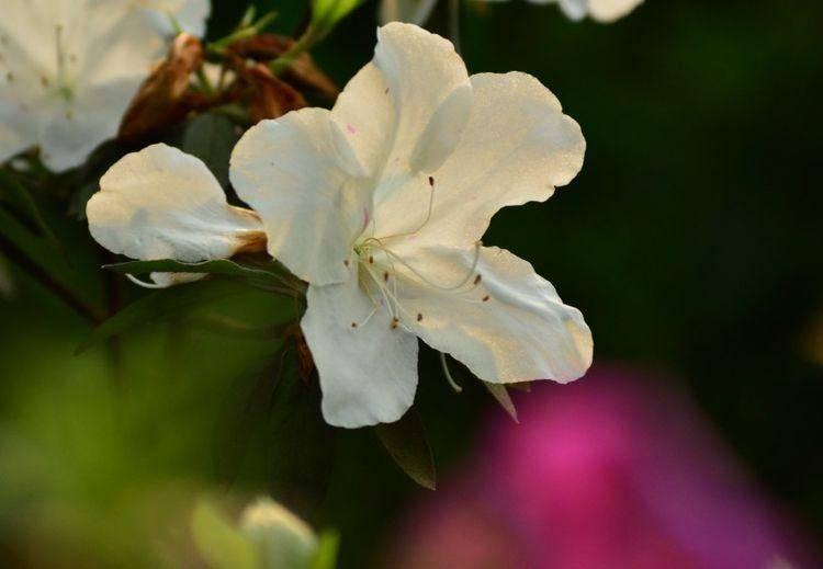 6月初,桃花开姻缘旺,喜鹊欢叫,甜蜜恋爱,幸福一生的四大生肖  第2张