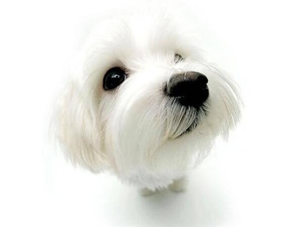 心理测试:你觉得哪只狗狗比较可爱!测出你内心是天使还是恶魔