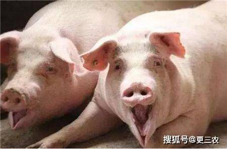 猪价猪e网(猪价论坛e)