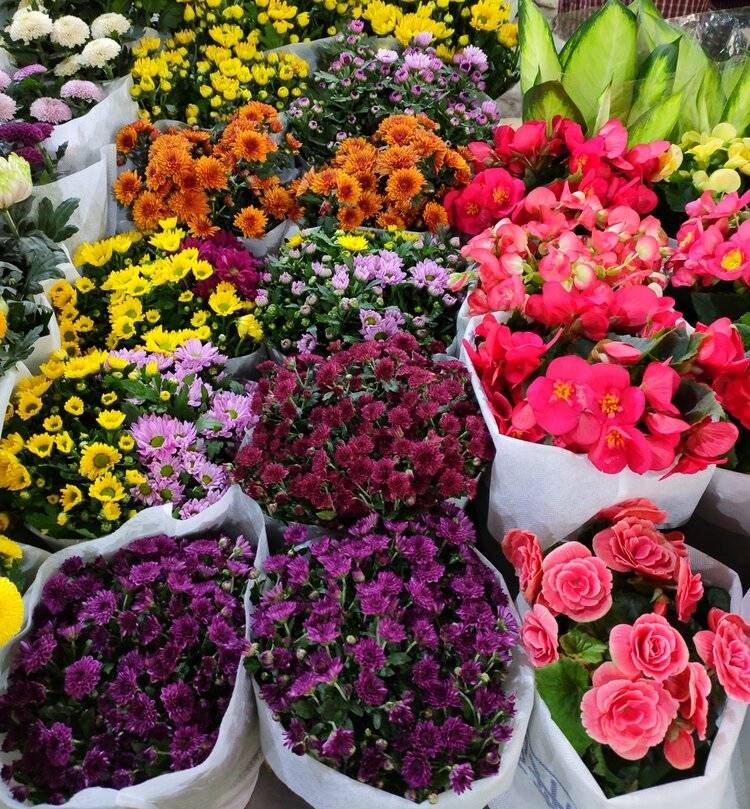 昆明藏匿了一座鲜花宝库:亚洲首屈一指的鲜花市场,值得寻香!