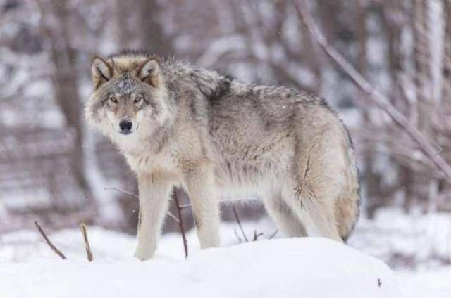心理测试:哪个动物最让你感觉到害怕?测你是不是一个害怕孤独的人  第2张