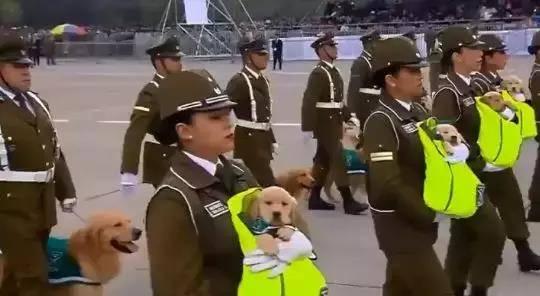 智利的警犬宝宝加入大阅兵,还嬉皮笑脸