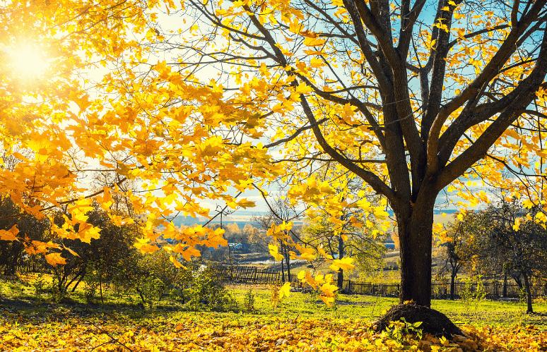 心理测试:你会选择哪棵树?秒测你最近的运气如何?  第3张
