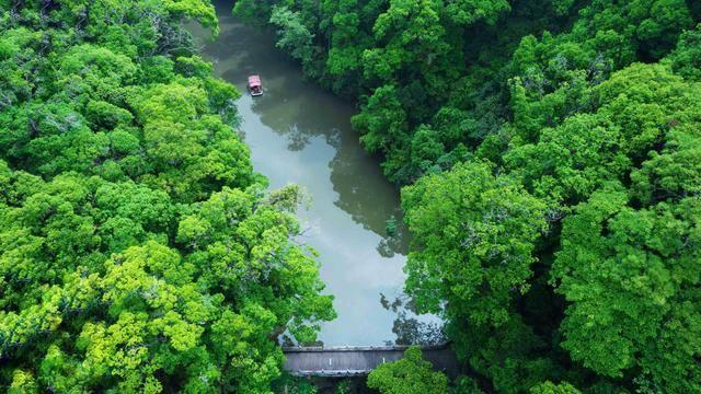 福建周末游去哪?快来这里感受绿野仙踪的森林之旅吧,温度超舒适