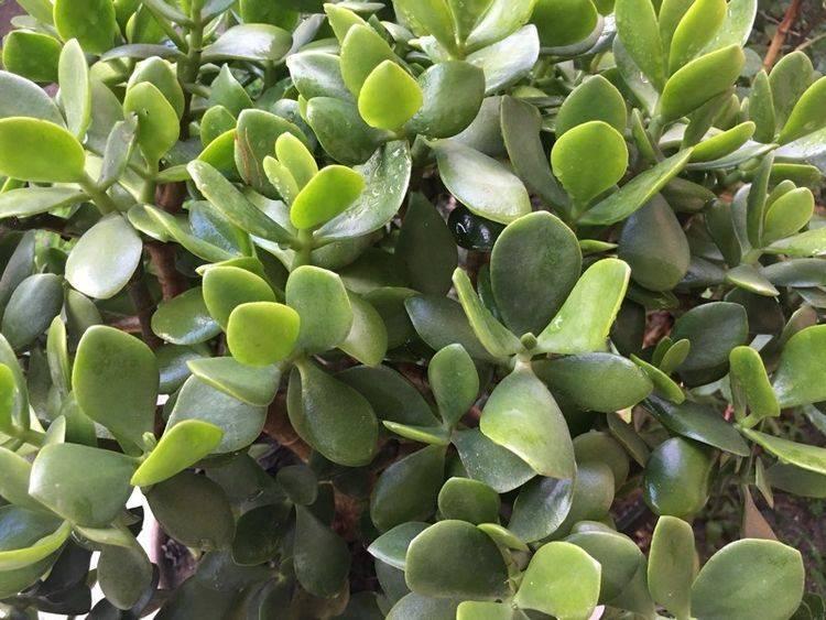 有些绿植想养挂都很难,一盆变多盆,越养越多油绿养眼