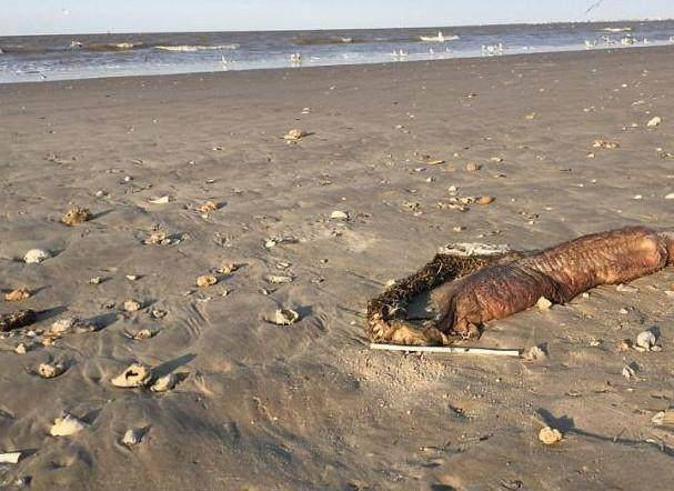 再一次现身海滩,当地人们大见识