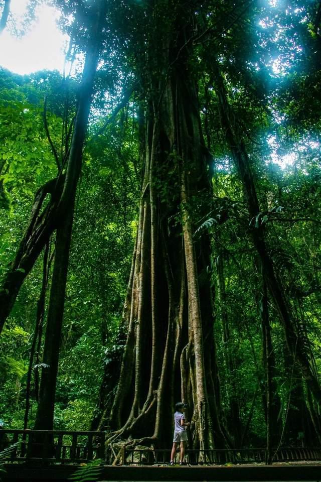 原创             西双版纳最美雨林却少有人知?无数顶流明星和综艺来此取景,预测马上要火