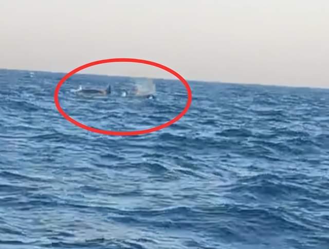 三头巨型海兽浮出辽宁海域!
