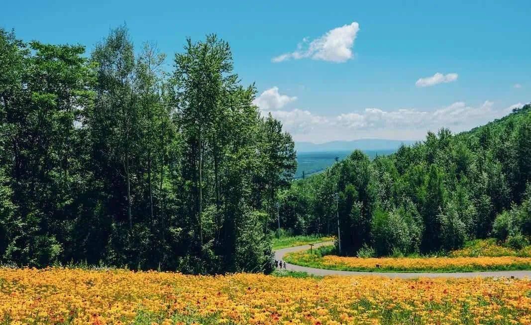 """这里均温只有22℃,森林覆盖率高达90%,堪称为""""绿野仙踪之境"""""""