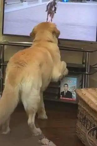 奥运马术比赛成功吸引动物围观,网友呼吁增设赛狗项目