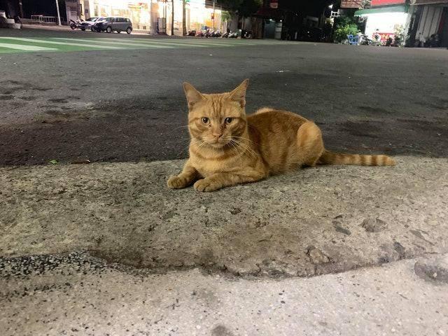 流浪橘貓多次试探女孩,守在门口却不敢进,猫:本喵等你开口呢?