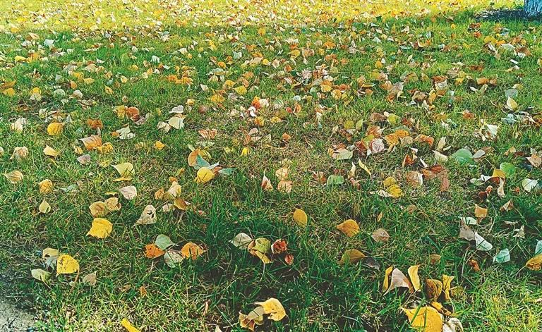 留住落叶 留住秋色 哈尔滨市公园落叶暂缓清理