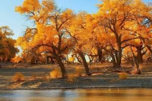 秋日果實,懸掛著熟透的信念