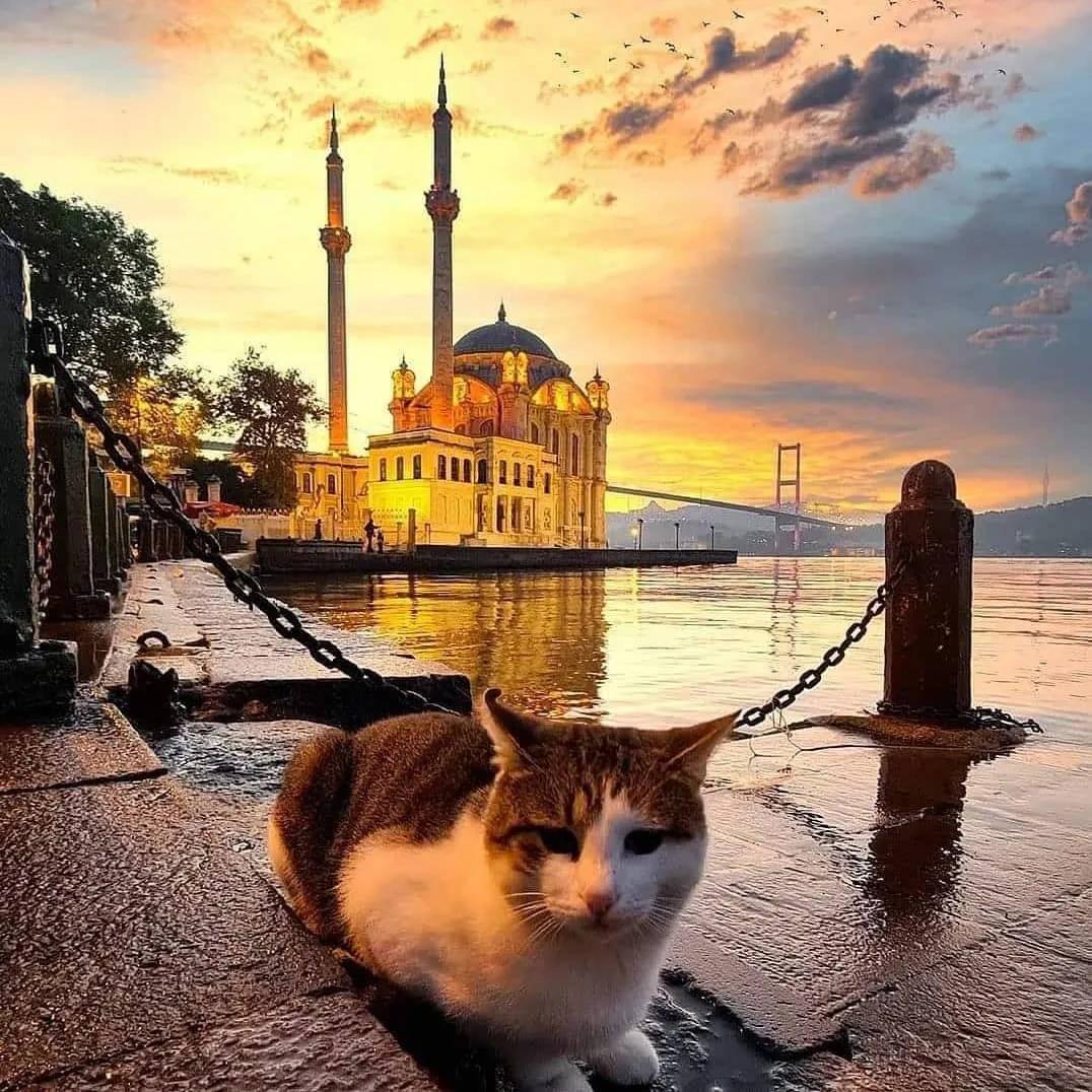 土耳其:一个被热气球耽误的国家