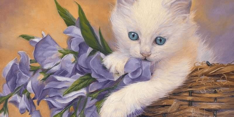 4幅猫咪图,哪一幅最像真的?测你爱情运走势如何