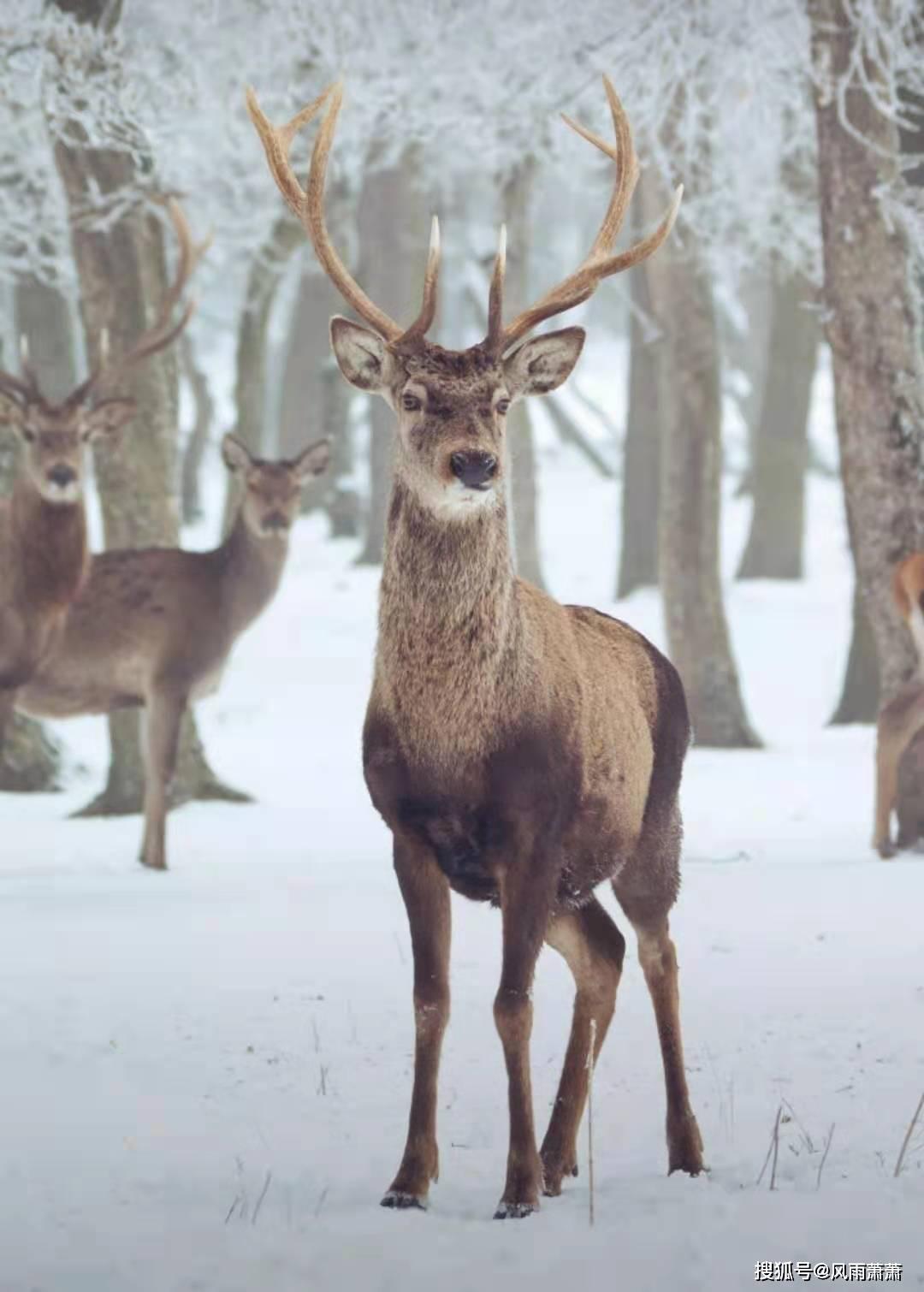 躲避不了雪,像野地猎手追击的狼