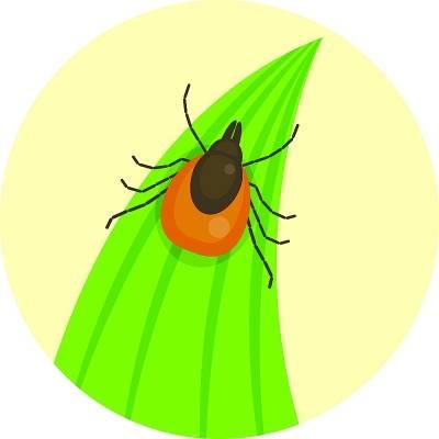 夏季户外活动谨防蜱虫
