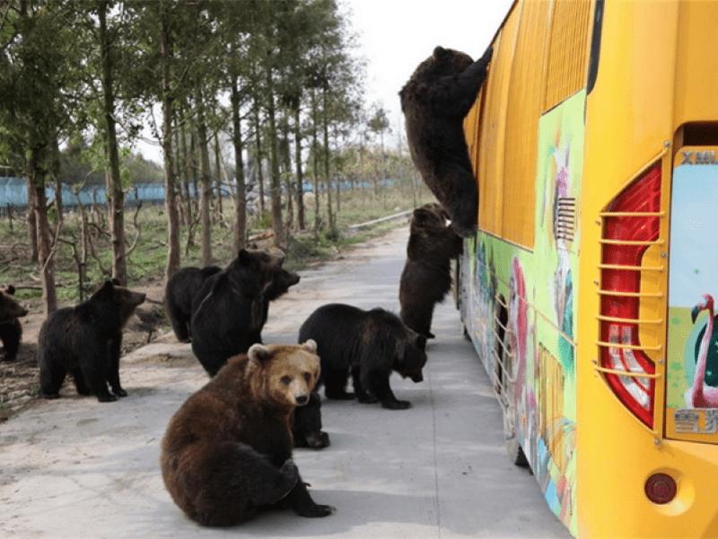 上海野生动物园职工猛兽区作业遭熊袭击死亡,该园正配合调查