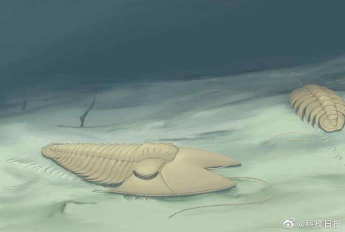 """哎哟,不错哦!90后研究生将5亿年前三叶虫命名为""""范特西虫"""""""