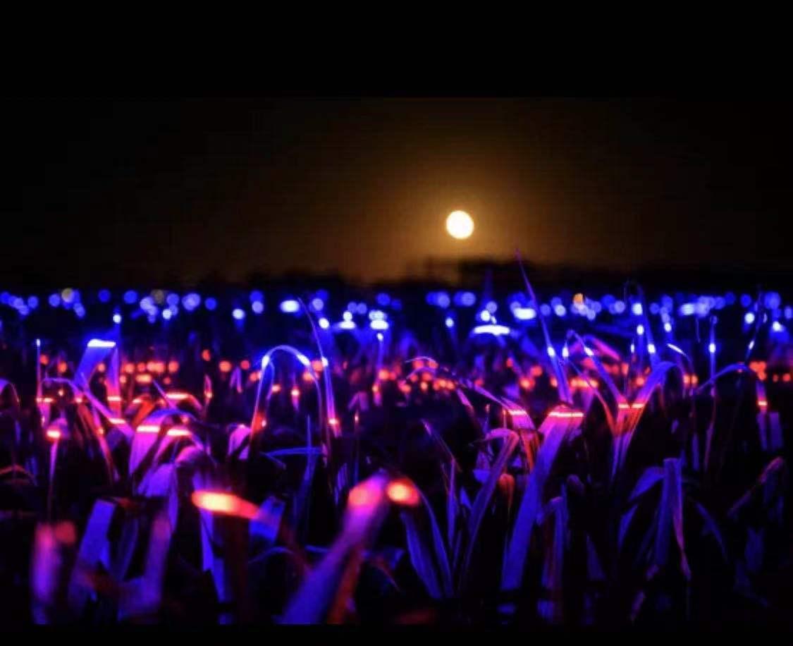 荷兰尖端艺术家创造新的景观,让灯光照耀在2万平方米的农田上