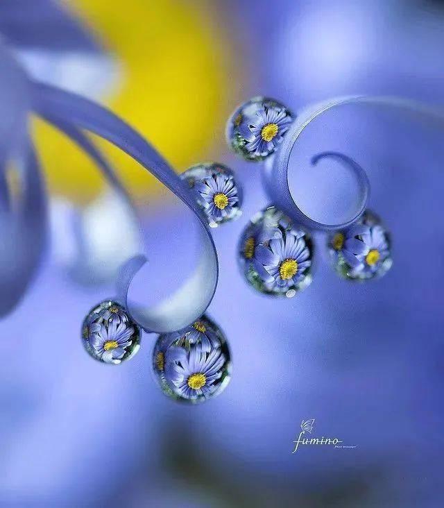 晶莹剔透,绚丽非凡的水中花(下)。。。_水珠