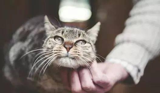 怎样缓解猫咪的紧张感