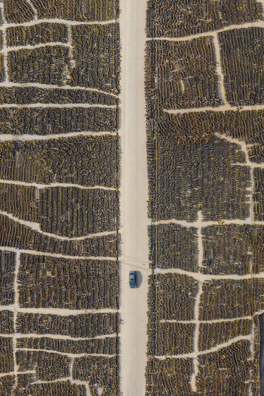 """被抛弃的40万辆""""僵尸车""""的照片 - 3"""