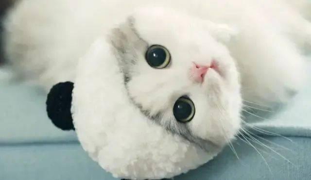 猫咪突然开始随地大小便图片