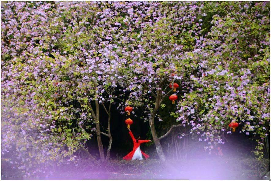 这片花海美到上了央视……