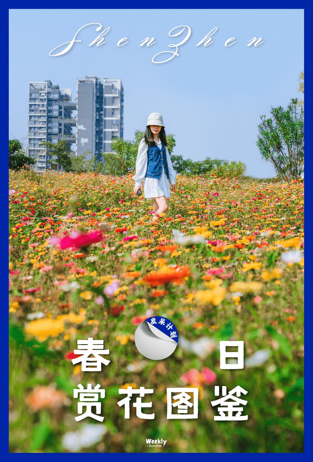 深圳「宫崎骏花园」,限时开放