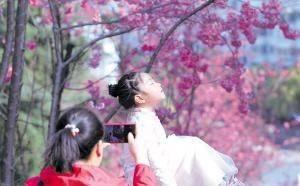 昆明动物园樱花节启幕 线上线下同赏 圆通樱潮