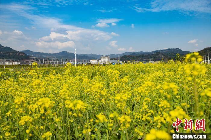 春回大地气象新 重庆万州花满城