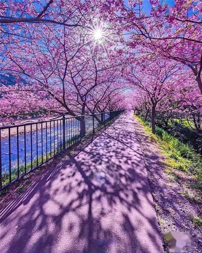 生活万岁:三月,相约在最美的春光里 网络快讯 第2张